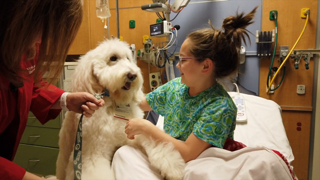 Pet Therapy 2020.15.12 Full Size
